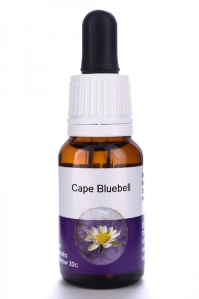 Living Cape Bluebell 15ml
