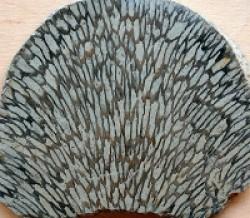 Korte PHI Koralle 15ml