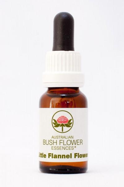 AUB - Little Flannel Flower 15ml