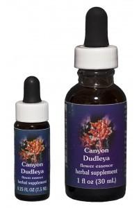 FES - Canyon Dudleya