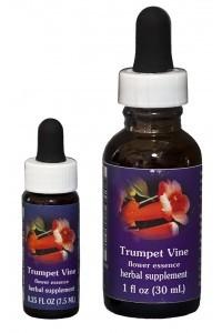 Trumpet Vine (red-orange)