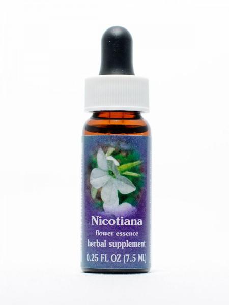 F.E.S. - Nicotiana (Blühender Tabak)