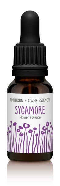Findhorn - Sycamore 15ml