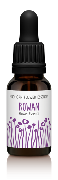 Findhorn - Rowan 15ml