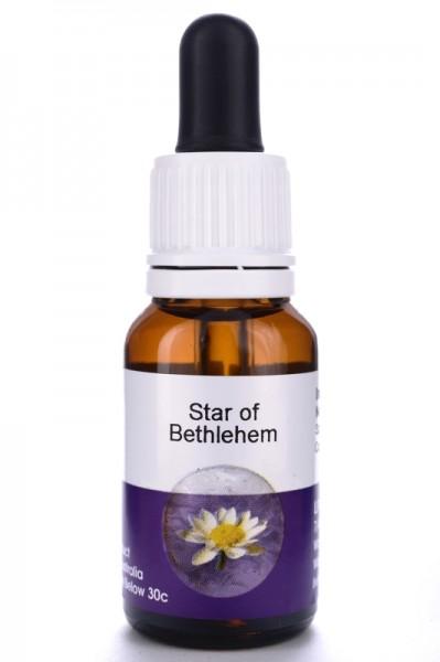Living Essences Star of Bethlehem 15ml