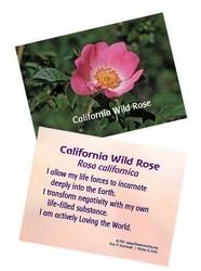 Jeu de cartes des élixirs californiens FES
