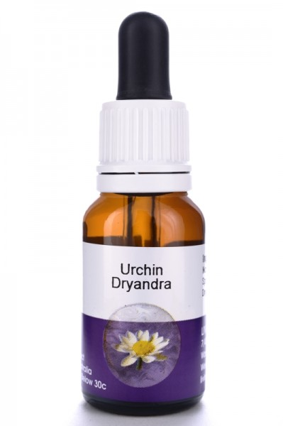 Living Essences Urchin Dryandra 15ml (MHD 10/14)