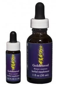 F.E.S. - Goldenrod (Kalif. Goldrute)