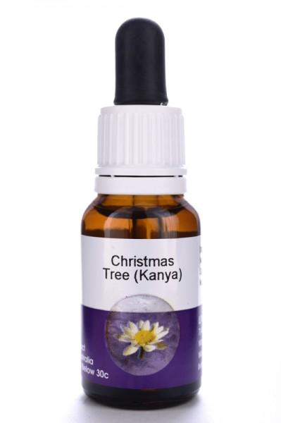 Living Essences Christmas Tree (Kanya) 15ml DLC 02.2021