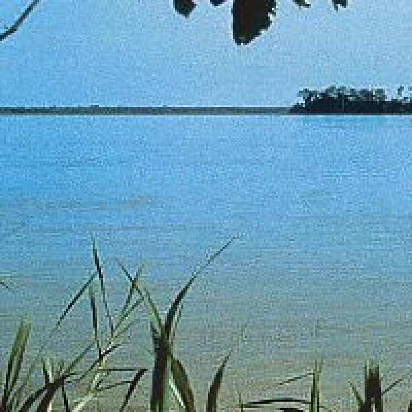 Korte PHI - Amazonas 15ml