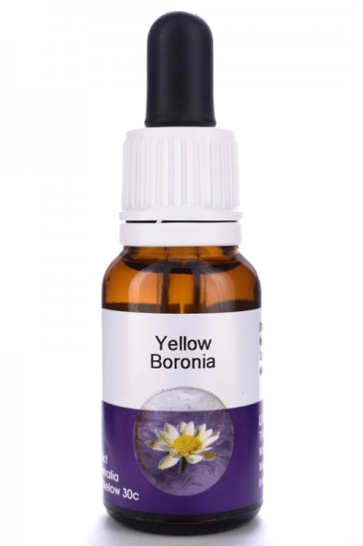 Living Essences Yellow Boronia 15ml