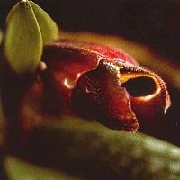 Korte PHI - Past Life Orchid 15ml