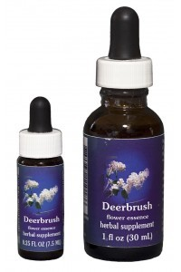 F.E.S. - Deerbrush (Säckelblume)