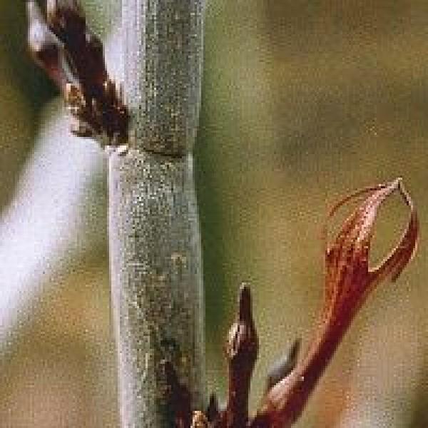 Korte PHI - Release cactus